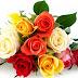 Τριαντάφυλλα: Δείτε τι σημαίνει κάθε χρώμα!