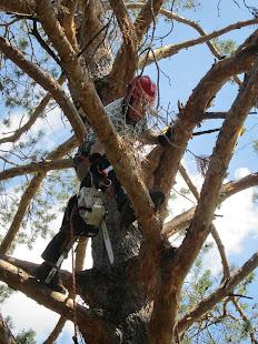 Bud Nadeau, Treeman Extraordinaire.