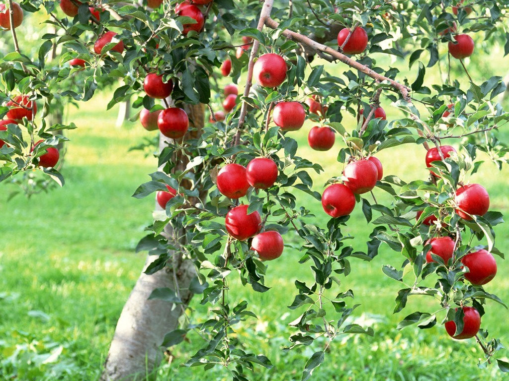 What Is A Good Natural Spray For Apple Trees