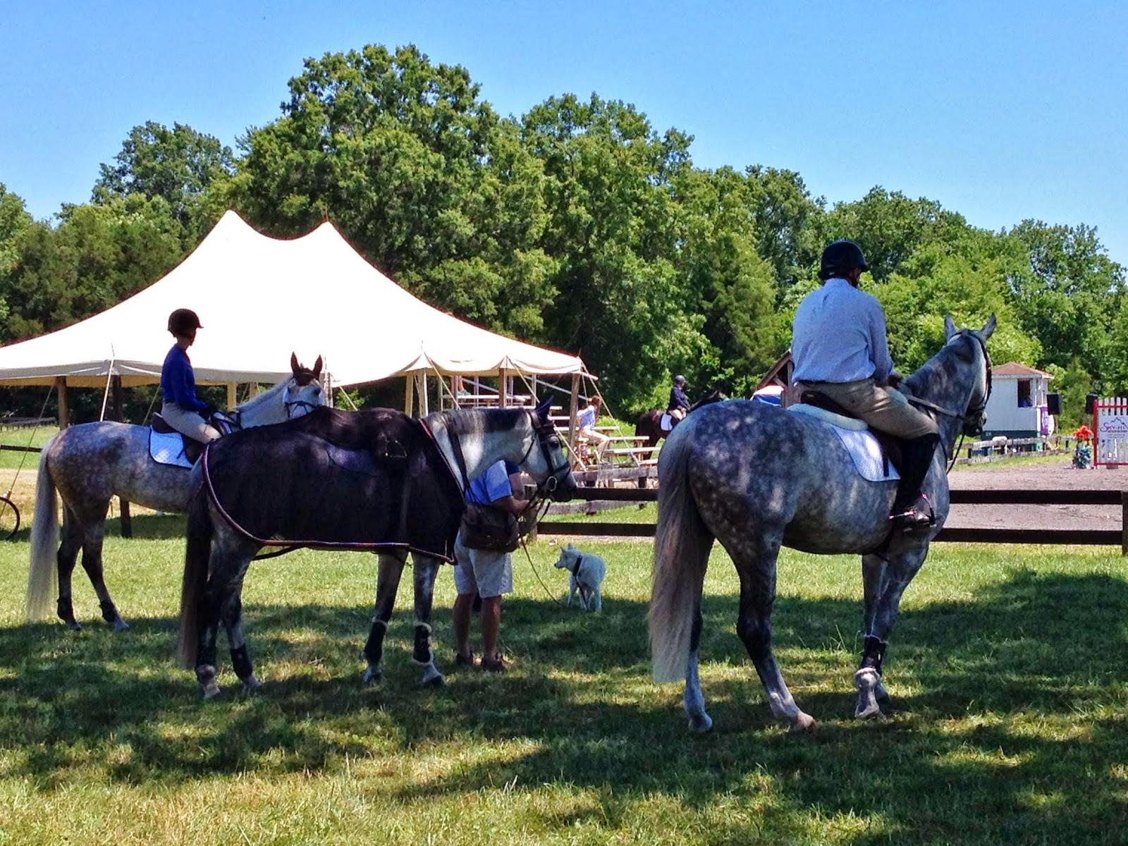 Three horses in the shade. Commonwealth Park, VA