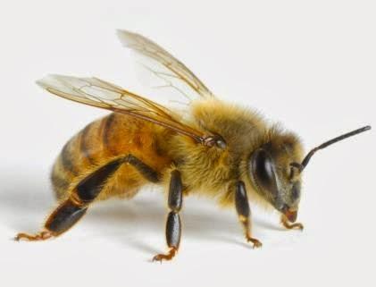 badan-imam-bukhari-digigit-lebah