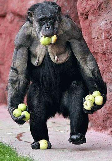 Maymunun Iştahı Iz Bırakın
