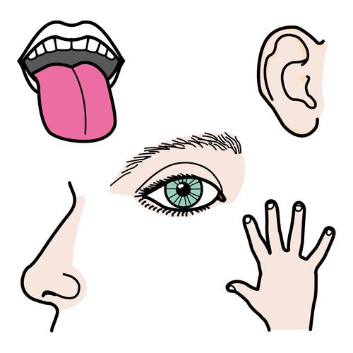 Los sentidos del cuerpo humano para colorear - Imagui