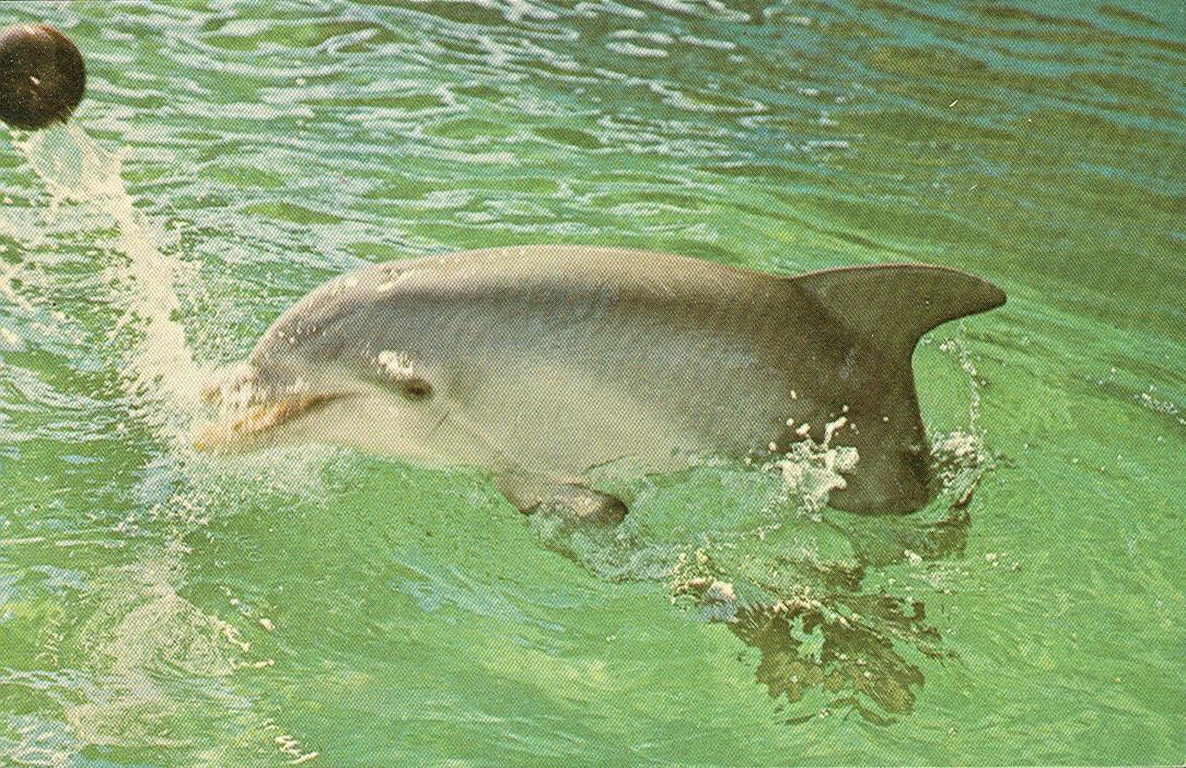 florida keys sharks. Florida Keys