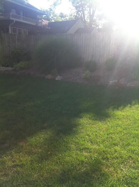 sunshine yard