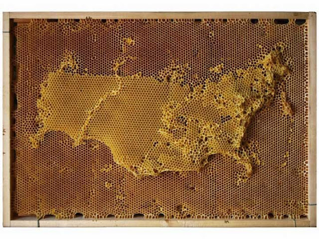 Luar-Biasa-Ternyata-Peta-Dunia-ini-Dibuat-oleh-Lebah1