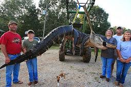 Keluarga Ini Berhasil Kalahkan Aligator Terbesar di Dunia