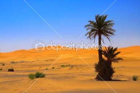 Pohon Palem Ditengah Gurun Sahara
