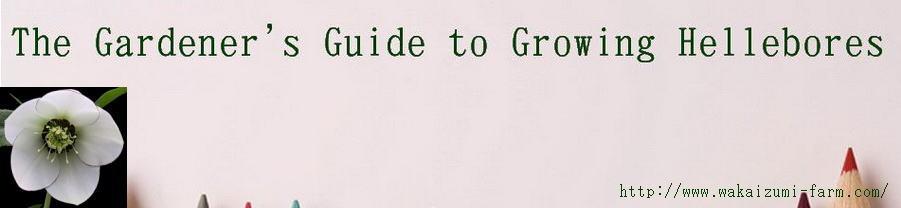 クリスマスローズコレクション花とおしゃべりBlog