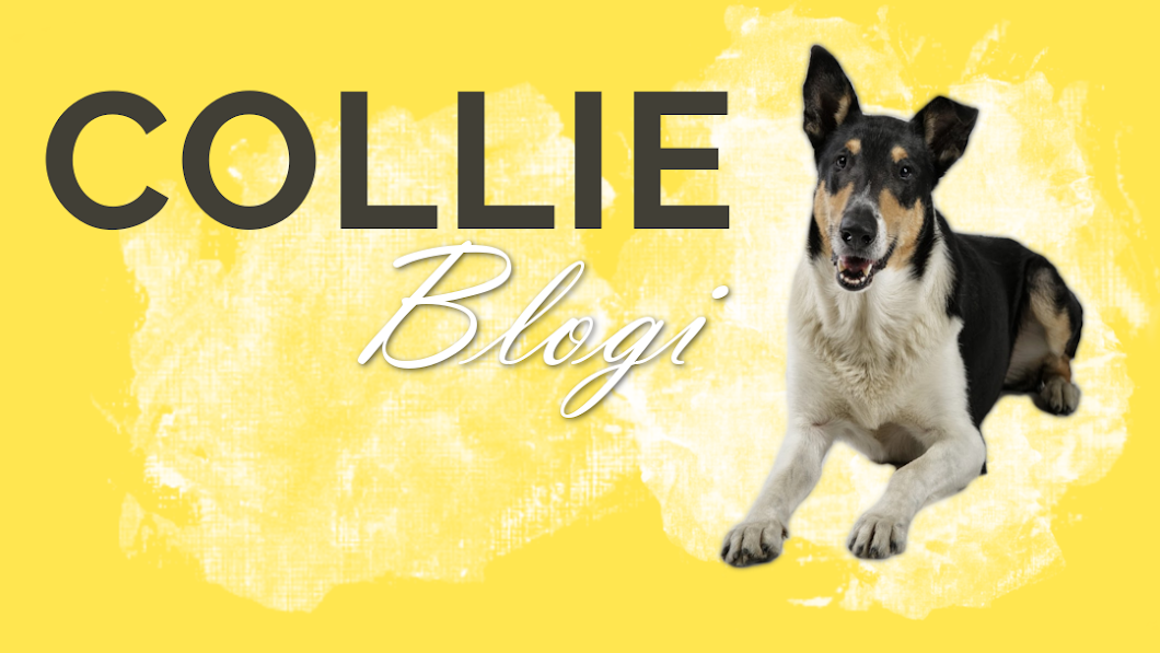 Collieblogi