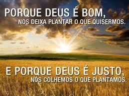 Cabe a você plantar as sementes do fruto que deseja!