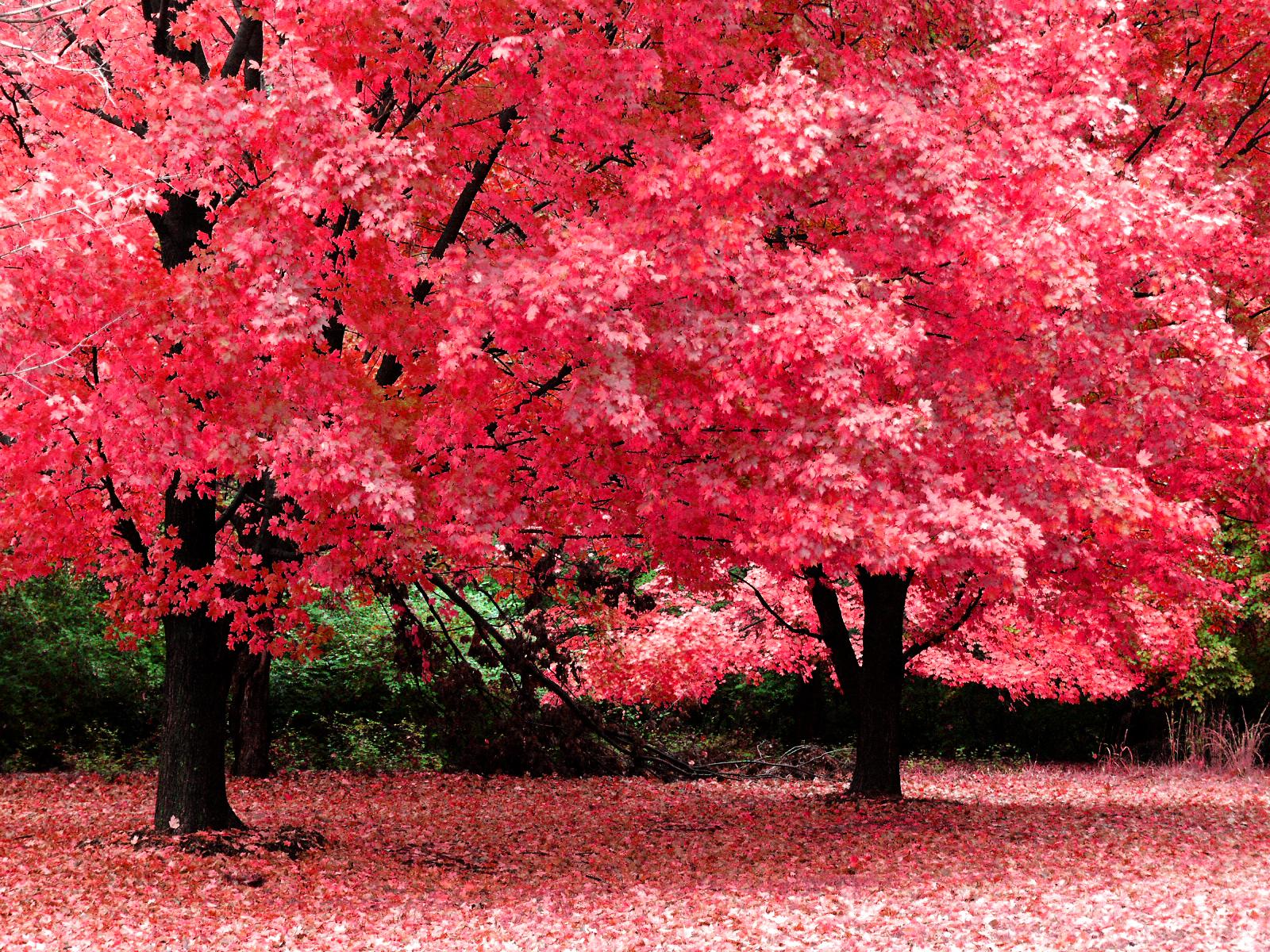 http://2.bp.blogspot.com/-YoQM4Y8nhUA/TqoreDOW5hI/AAAAAAAAQuU/NWADm8n7OlI/s1600/The-best-top-autumn-desktop-wallpapers-32.jpg