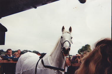 The famous Desert Orchid. xx