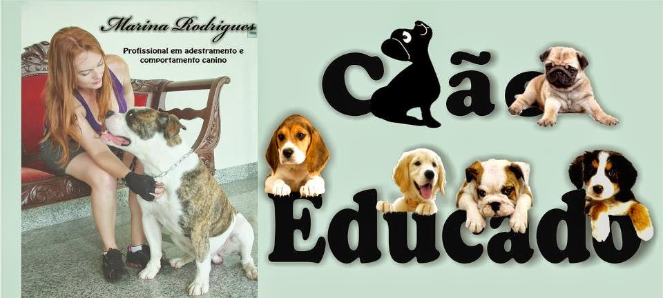 Cão Educado