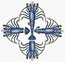 Dernières crevettes