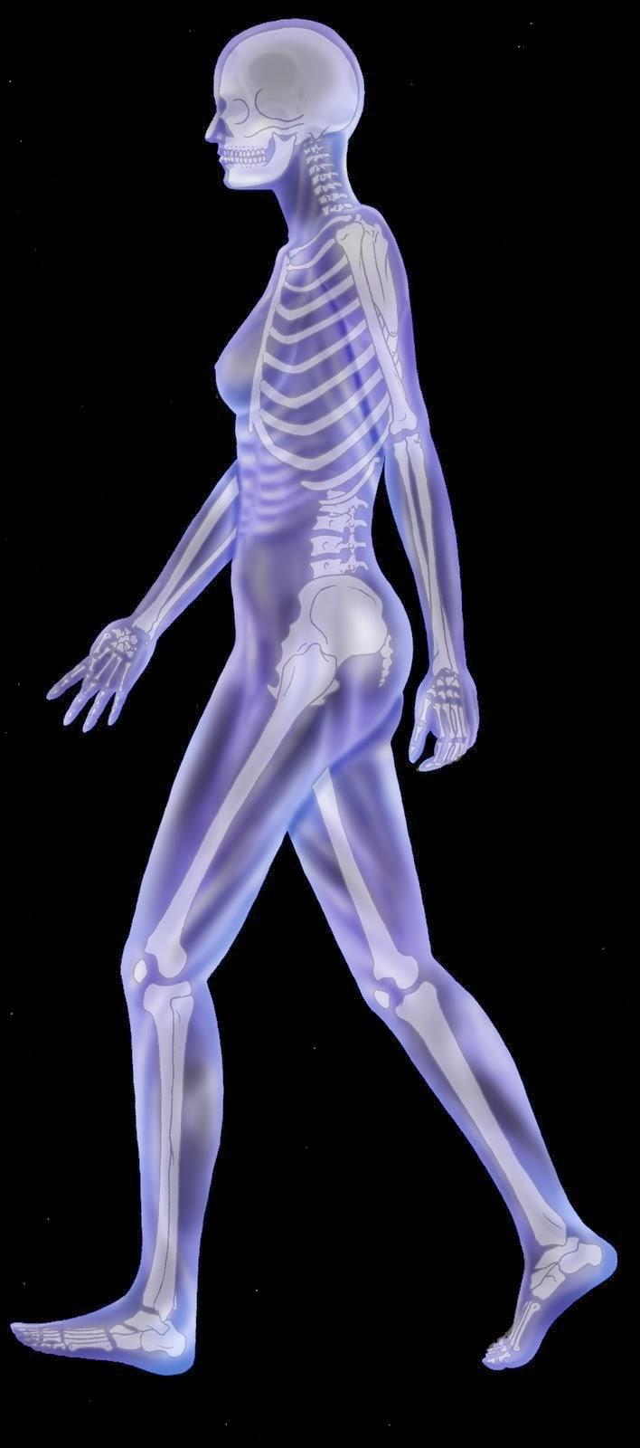 Anatomía Radiológica : Anatomía Radiológica y Los Músculos Esqueléticos
