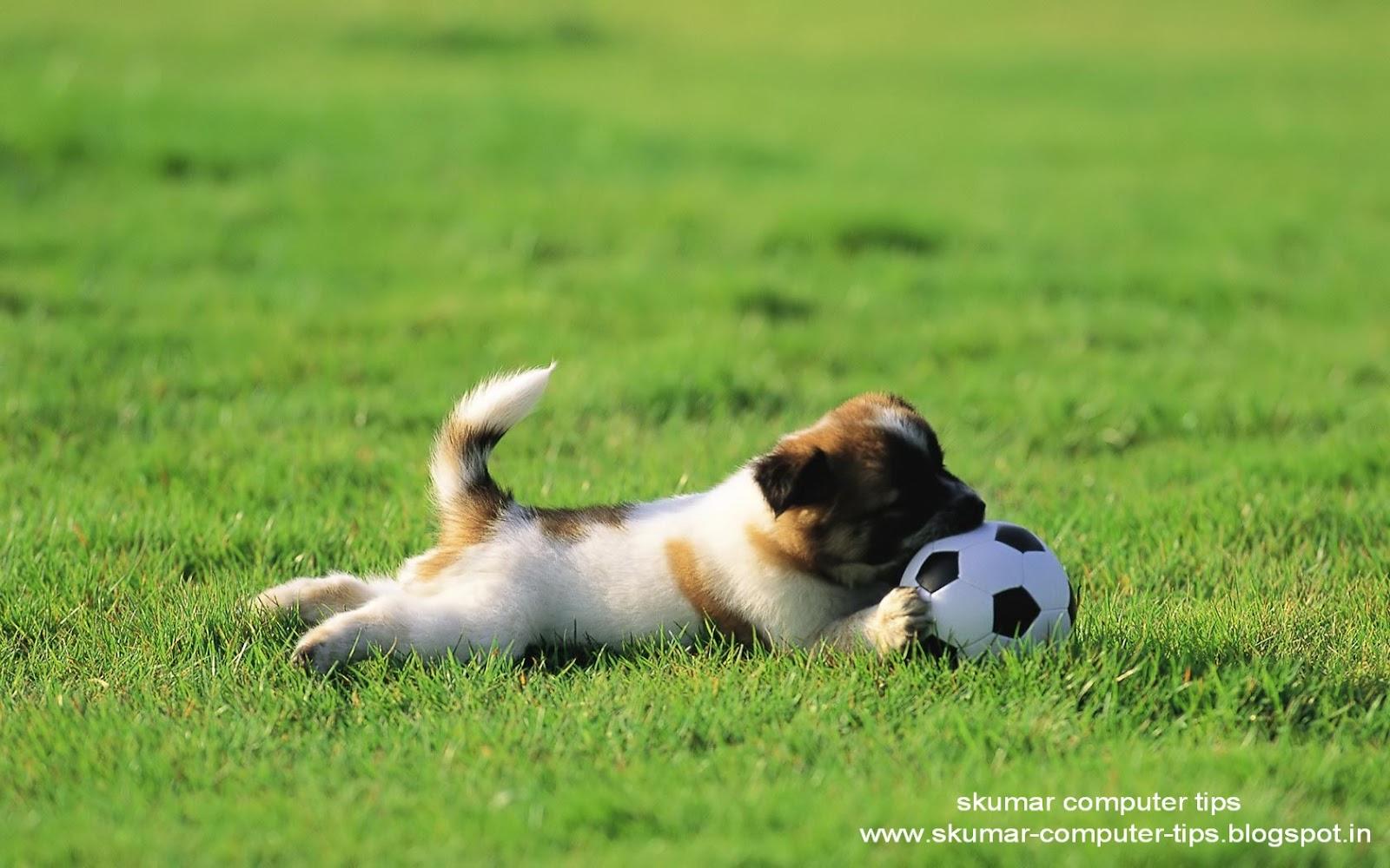 http://2.bp.blogspot.com/-Yp9ki0d2Ofs/T9YLptfzzZI/AAAAAAAAEg0/ln-vXhgbs5c/s1600/Puppy_dogs_-_Junior_soccer_hd_wallpaper.jpg
