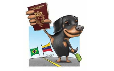 crian-perros-de-raza-en-venezuela-para-vederlos-brasil-frontera-negocio