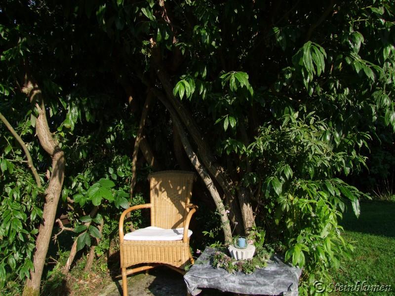 Weidentipi im Garten