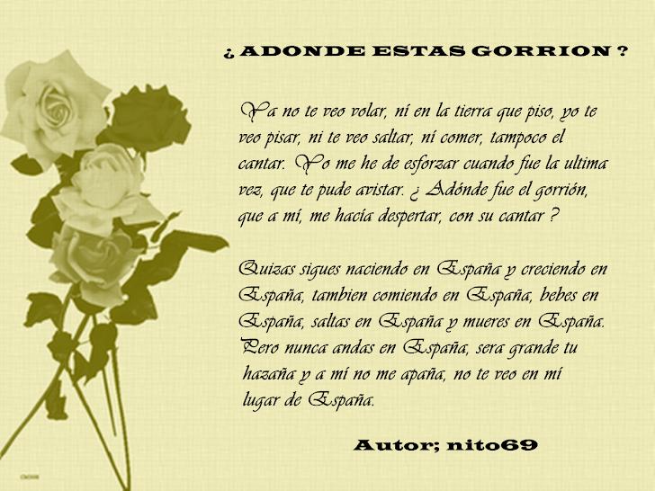 ¿ ADONDE ESTAS GORRION ?