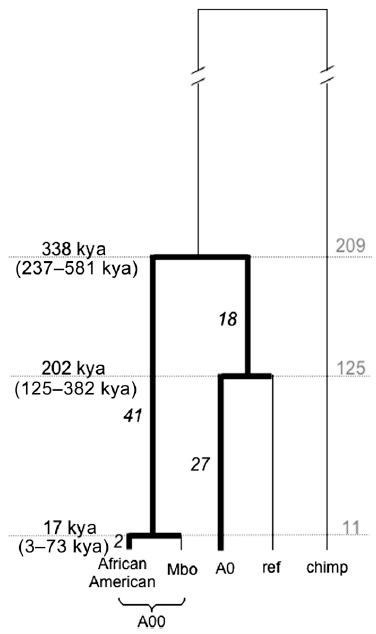 y chromosome dating R1a (y-dna) is a specific sequence of nucleotides in the male y chromosome and a y-chromosome haplogroup identified with the genetic marker m17 r1a originated as a single mutation of one male, the r1a originator considered to be the ancestor of all individuals carrying r1a, and descends of.