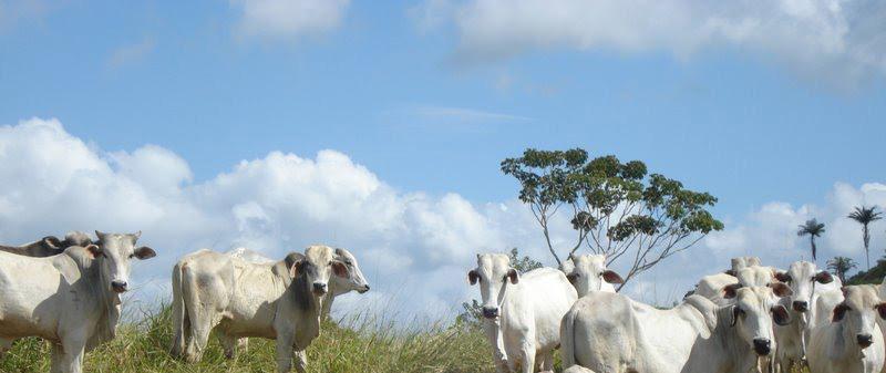 Dahora Rural do Sul da Bahia.