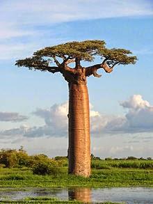Los Árboles son las Columnas de la Tierra. Si los derribamos, el Cielo caerá sobre Nosotros.