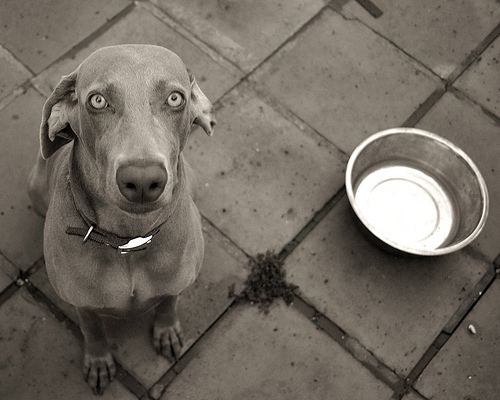 Dog Is Hungry But Won T Eat