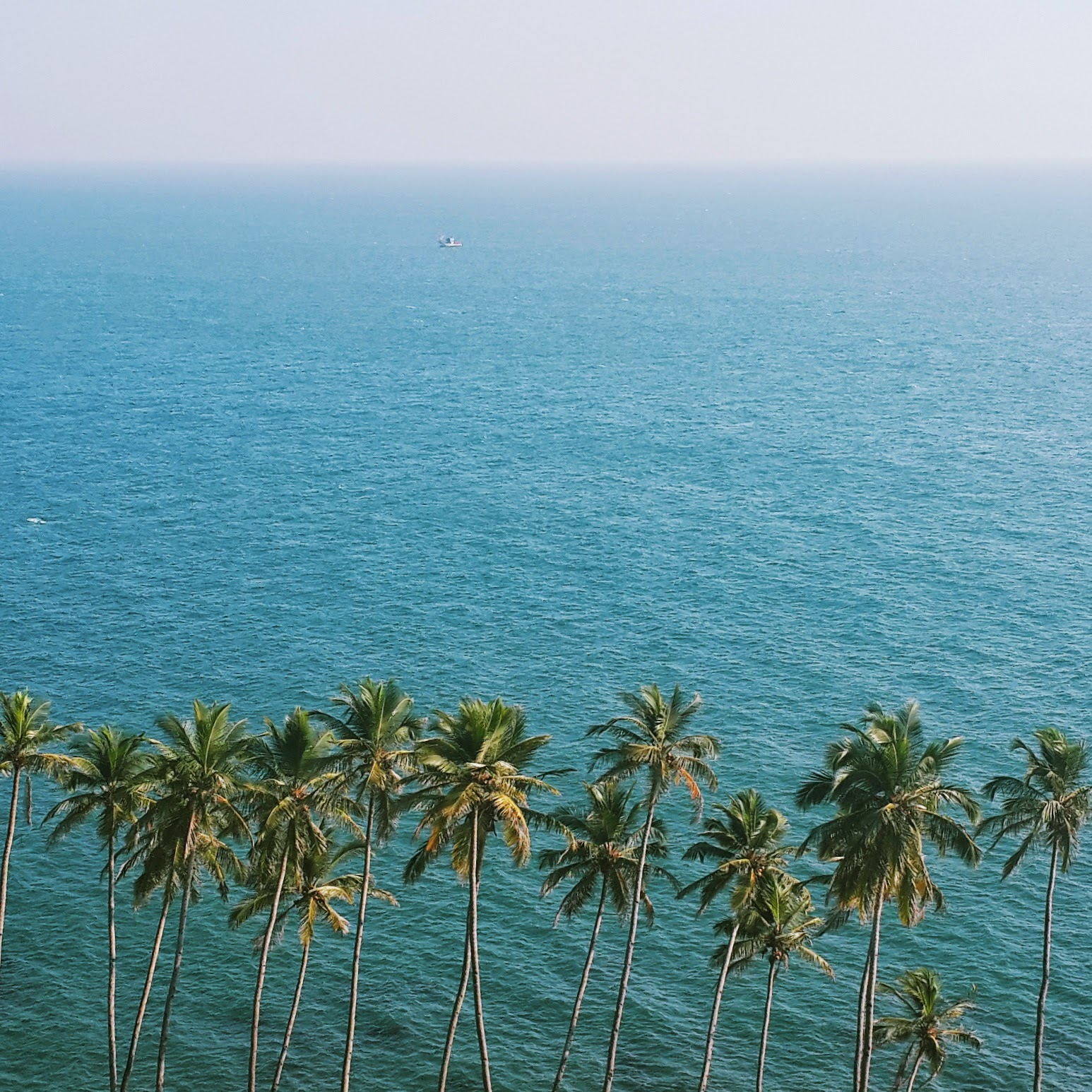 landscape, scenery, goa, coconut, trees, palms, sea, water, capture, photography, landscape
