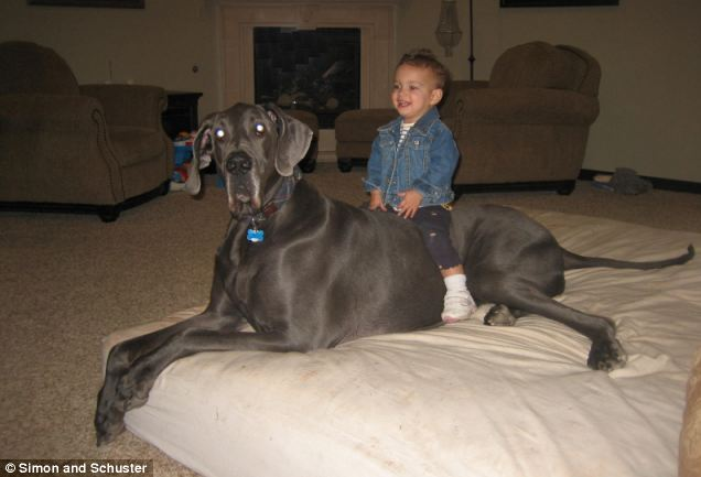 Biggest great dane in the world 2012