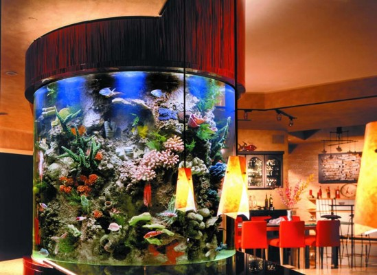 Custom Aquariums Ideas Modern House Interior