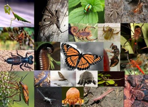 Estudo dos Artrópodes - Características e classes