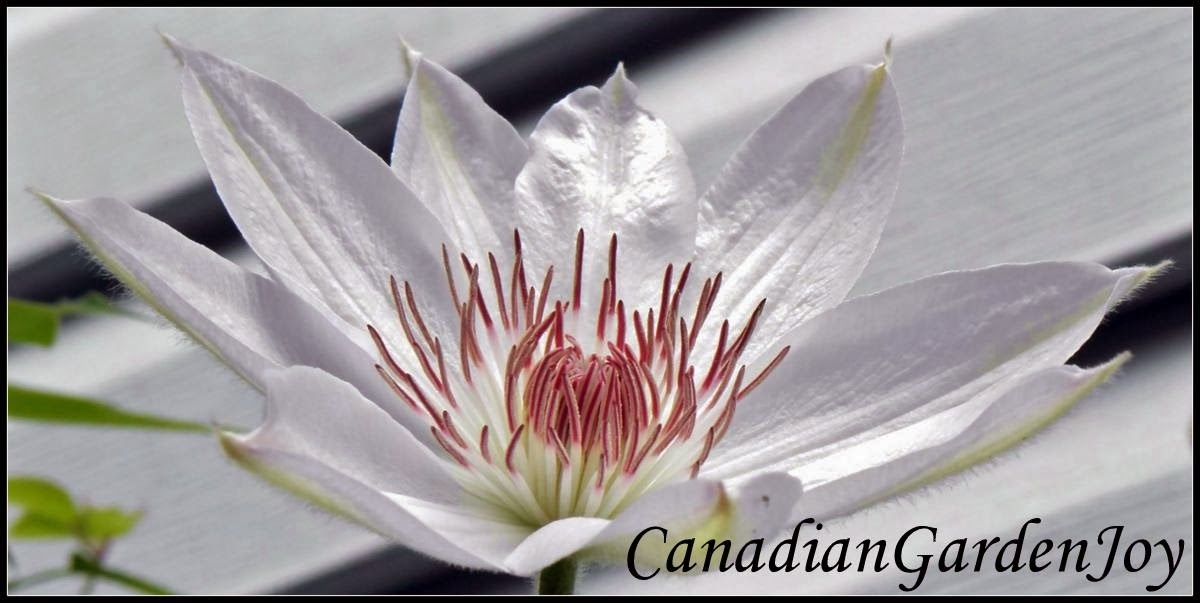 CanadianGardenJoy