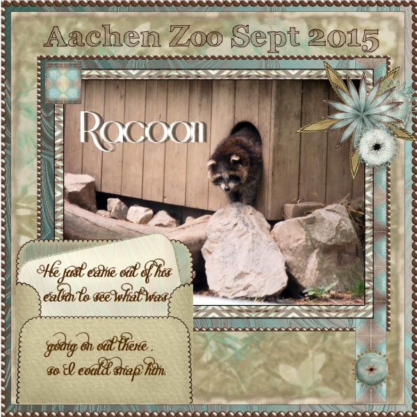 April 2016 – Racoon