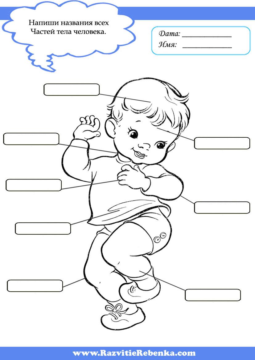 части тела человека картинки для детей