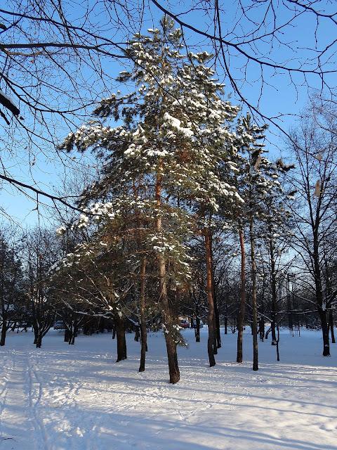 Witolin. Zima w Tarnowieckim lesie.