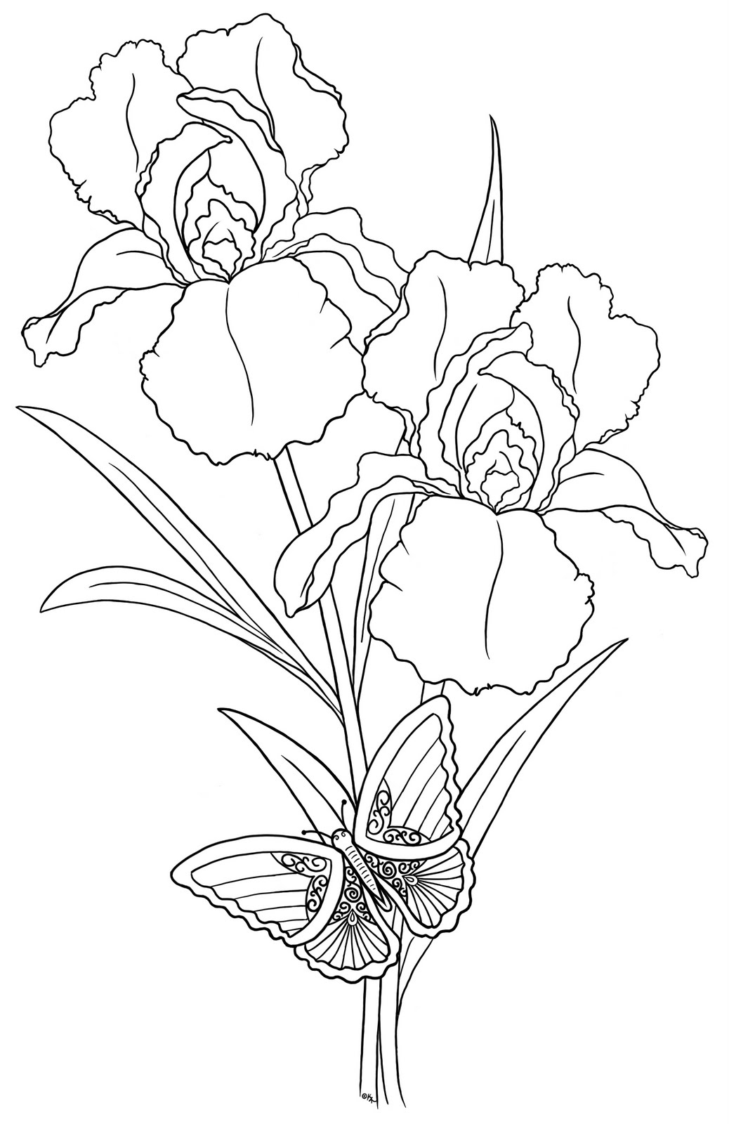 Line Drawing Of Iris Flower : Iris outline drawing gallery