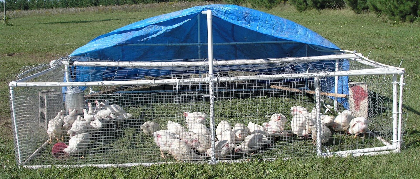 The cheerful agrarian diy chicken tractor pricing for Pvc chicken tractor plans