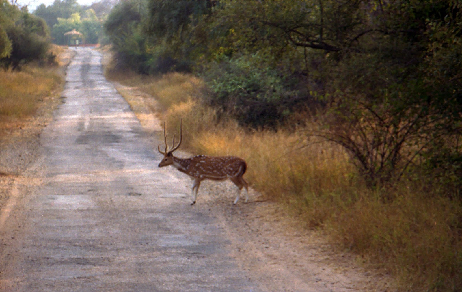 Sariska India  city photos : ... Sariska Tiger Reserve and Near by Places ~ Popular Temples of India