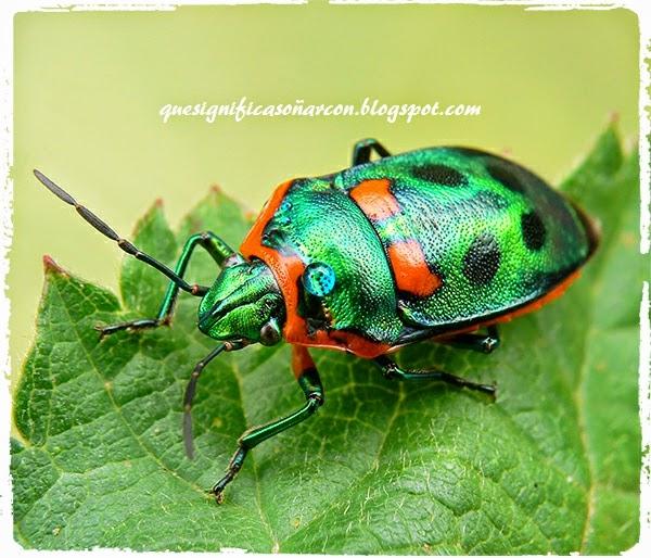 cual es el significado de soñar con insectos