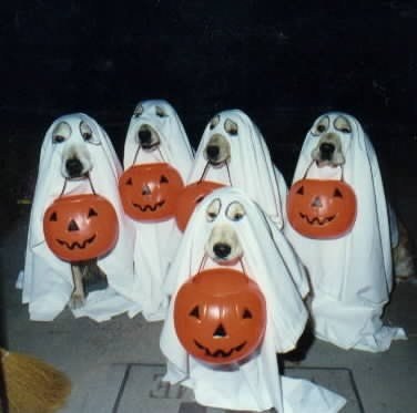 Email Forwards Fun!: Cute/Funny Halloween Dog Costumes