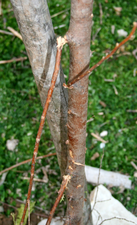Damaged trees :(