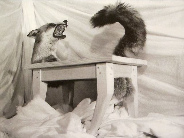 Mondoblogo objects surreal - Victor brauner loup table ...