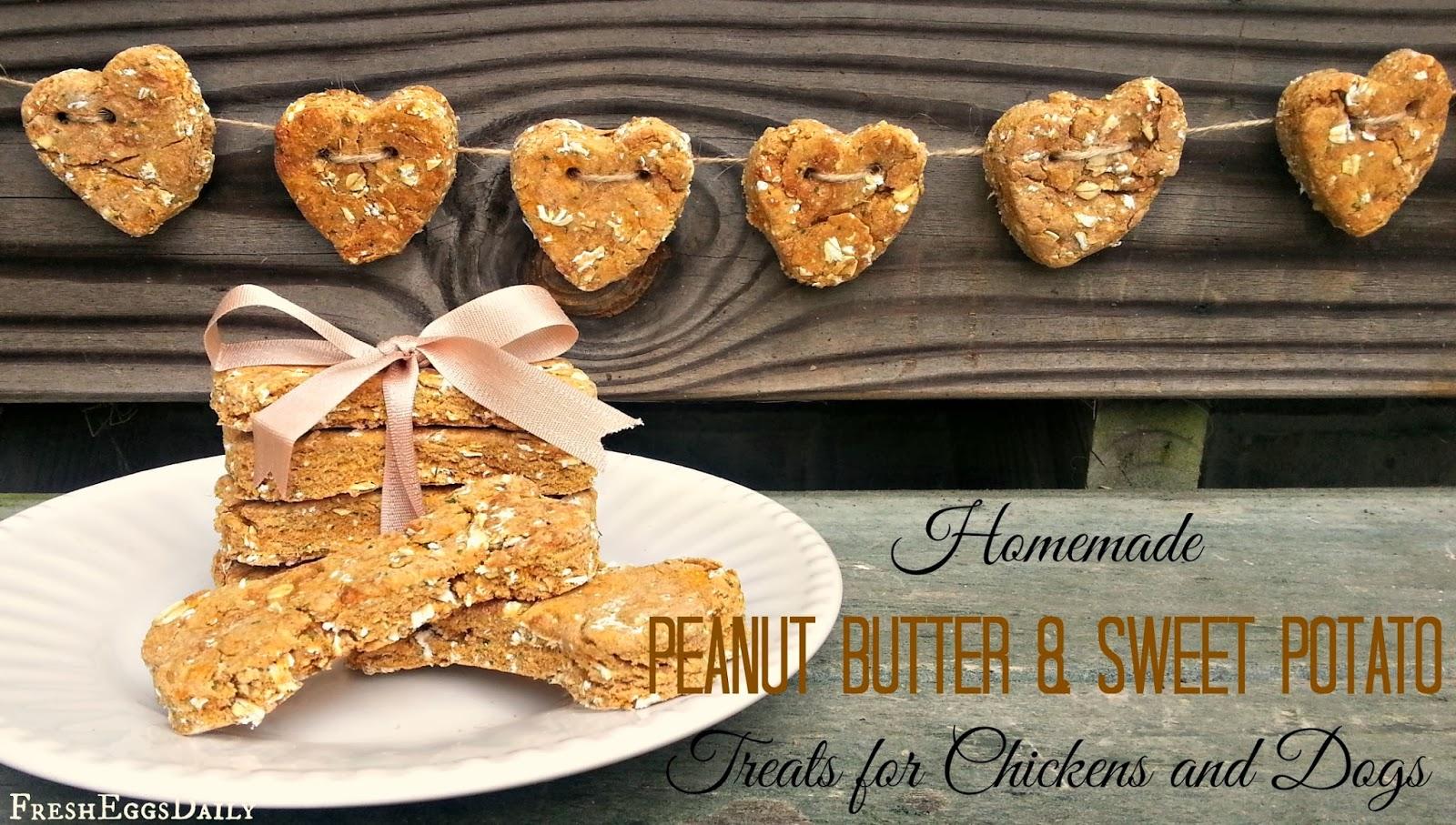 Homemade peanut butter and sweet potato treats for for Easy sweet treats with peanut butter