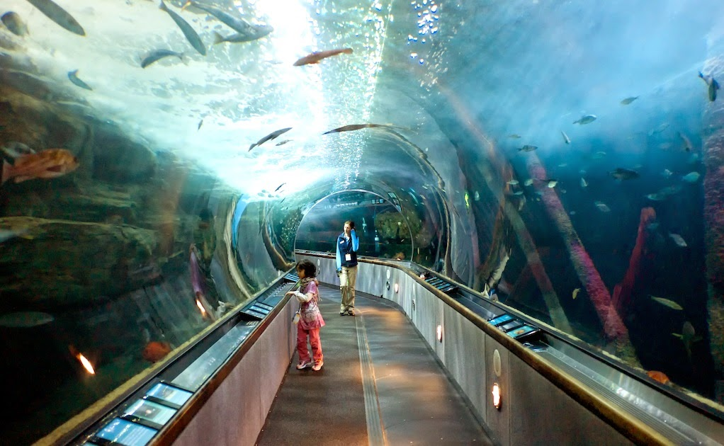 Aquarium Of The Bay Em San Francisco Na Calif Rnia Dicas