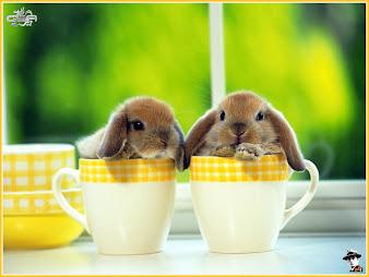#28 Rabbit Wallpaper