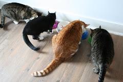 4 kediydiler....