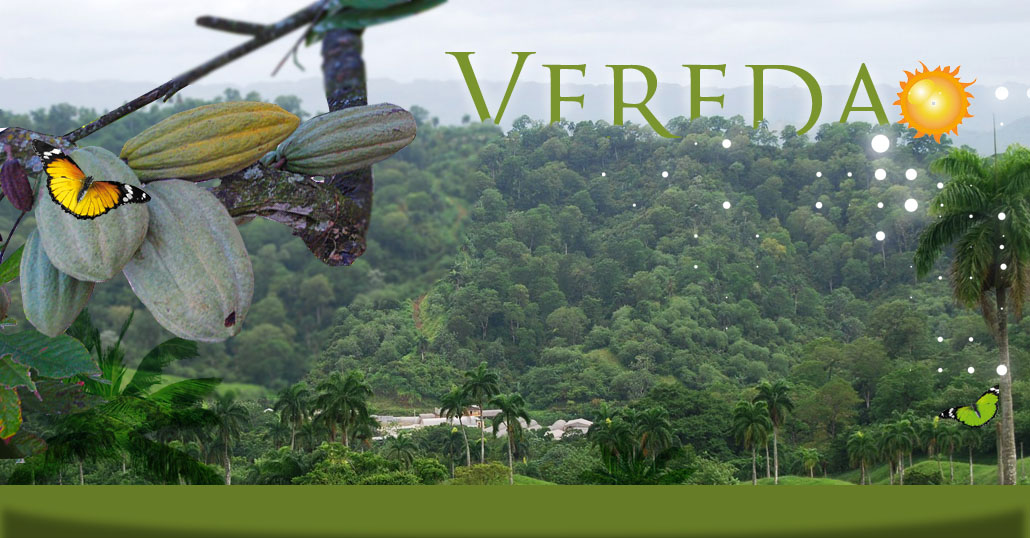 VEREDAGH.COM