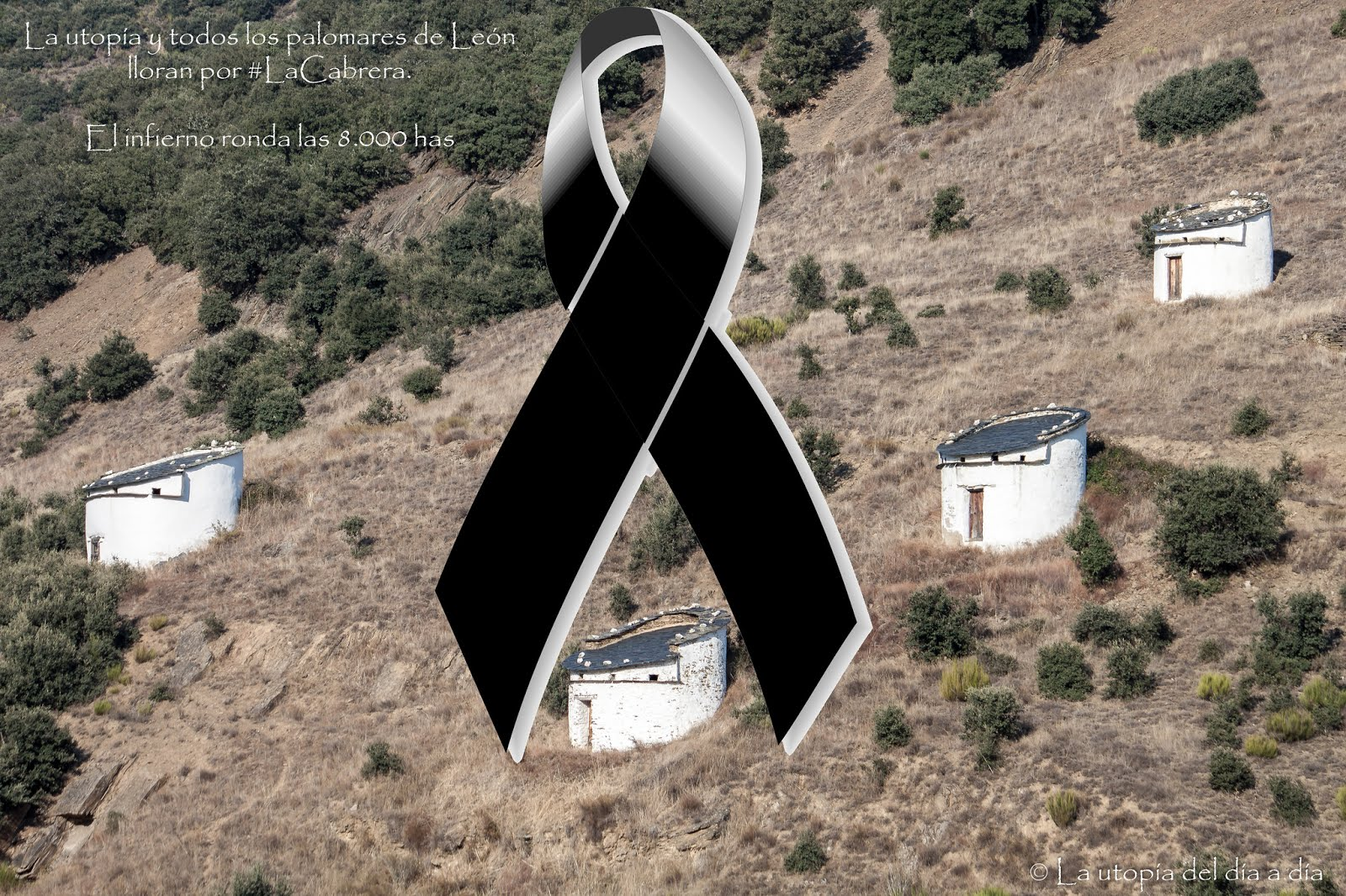 La utopía y todos los palomares de León lloran por #LaCabrera