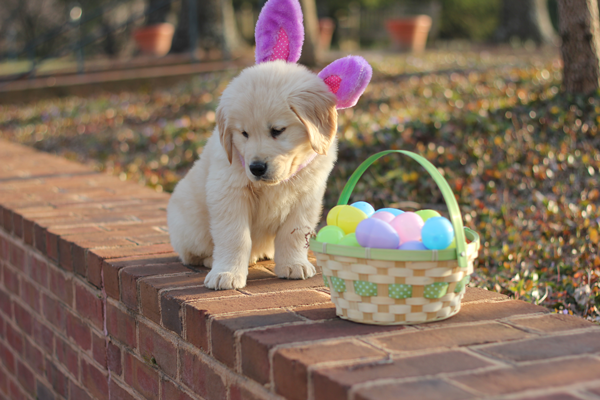 Happy Easter Puppy | quotes.lol-rofl.com